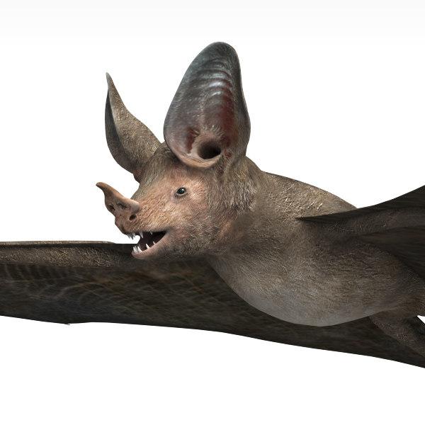 3dsmax bat wings