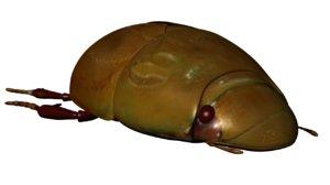 water beetle 3d obj