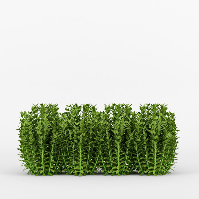 buxus 3d max
