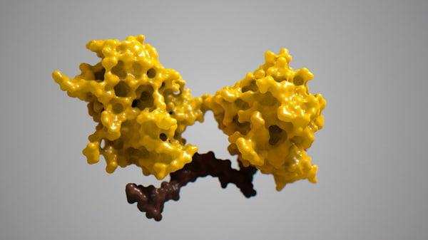 p63 proteins bound dna obj