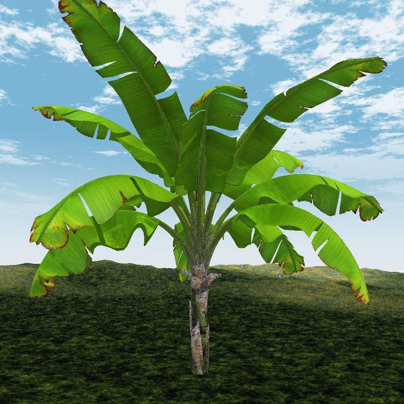 banana tree 3d 3ds