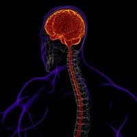 x-ray brain ma