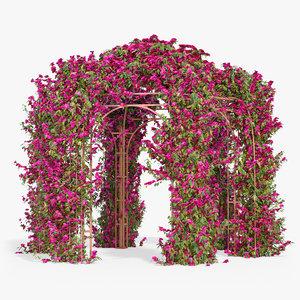 max pergola bougainvillea flowers ivy
