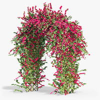 Pergola Bouganvillea Ivy With Flowers Arch