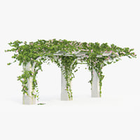 Pergola Climbing Roses With Flowers Ivy Angled