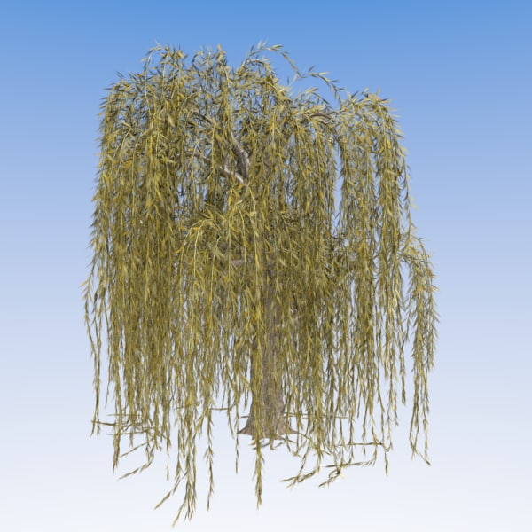 weeping willow 3d model