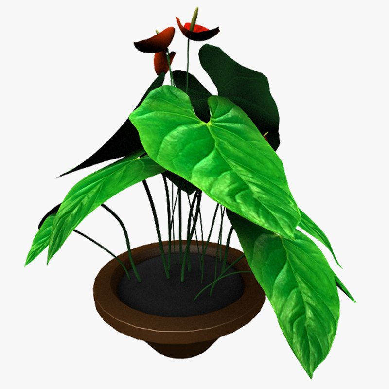 3d model of anthurium