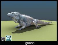 iguana(1)