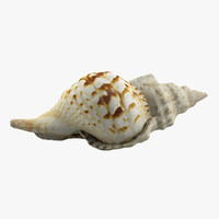 sea shell seashell 3d max