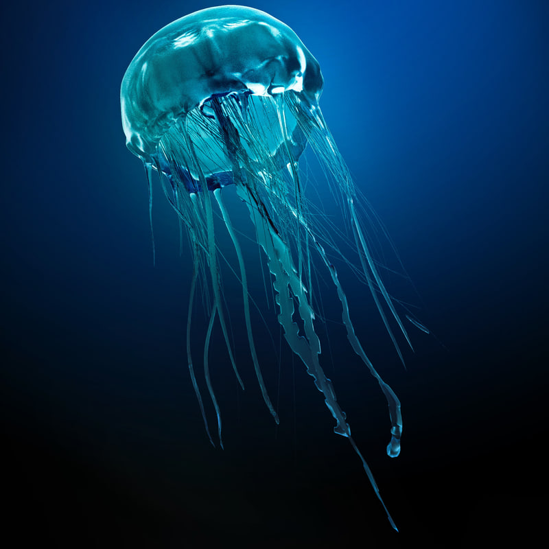 Jellyfish jelly fish max for Fish in jellyfish