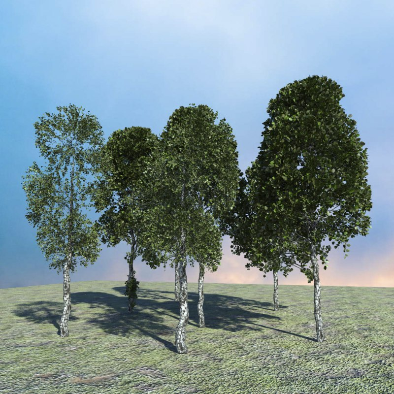 3d burches tree model