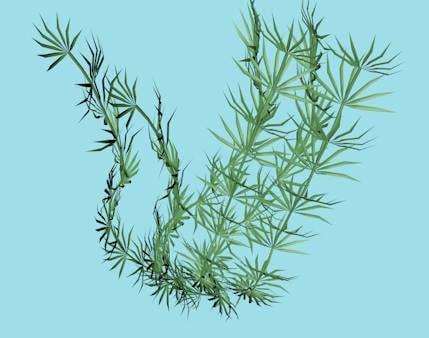 sea grass xml 3ds