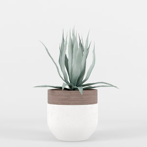agave plants max