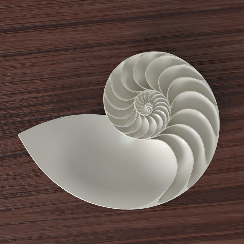 3d model nautilus shell