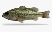 3ds max micropterus salmoides largemouth bass
