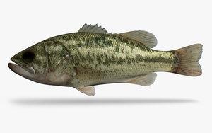 3d micropterus salmoides largemouth bass model