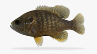 3d model lepomis cyanellus green sunfish