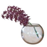 3d orchidaceae model