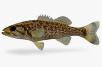 3d micropterus dolomieu smallmouth bass
