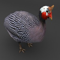 Guinea Fowl Bird dark