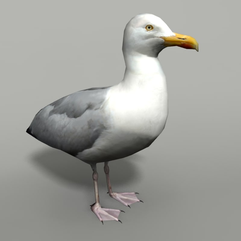 max gull seagull sea