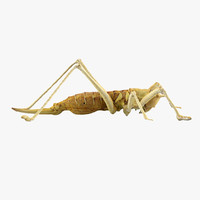 3d model grasshopper grass hopper