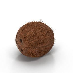 3d model of coconut fruit