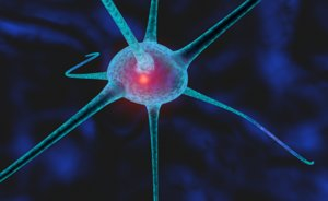 3d model nerve cell