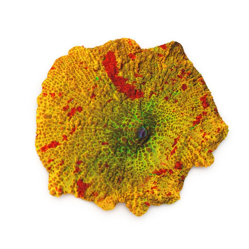 jawbreaker mushroom coral 3d model
