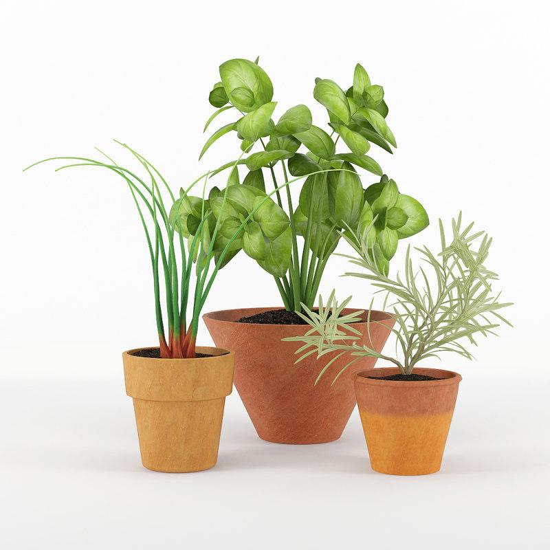 kitchen plants 3d max