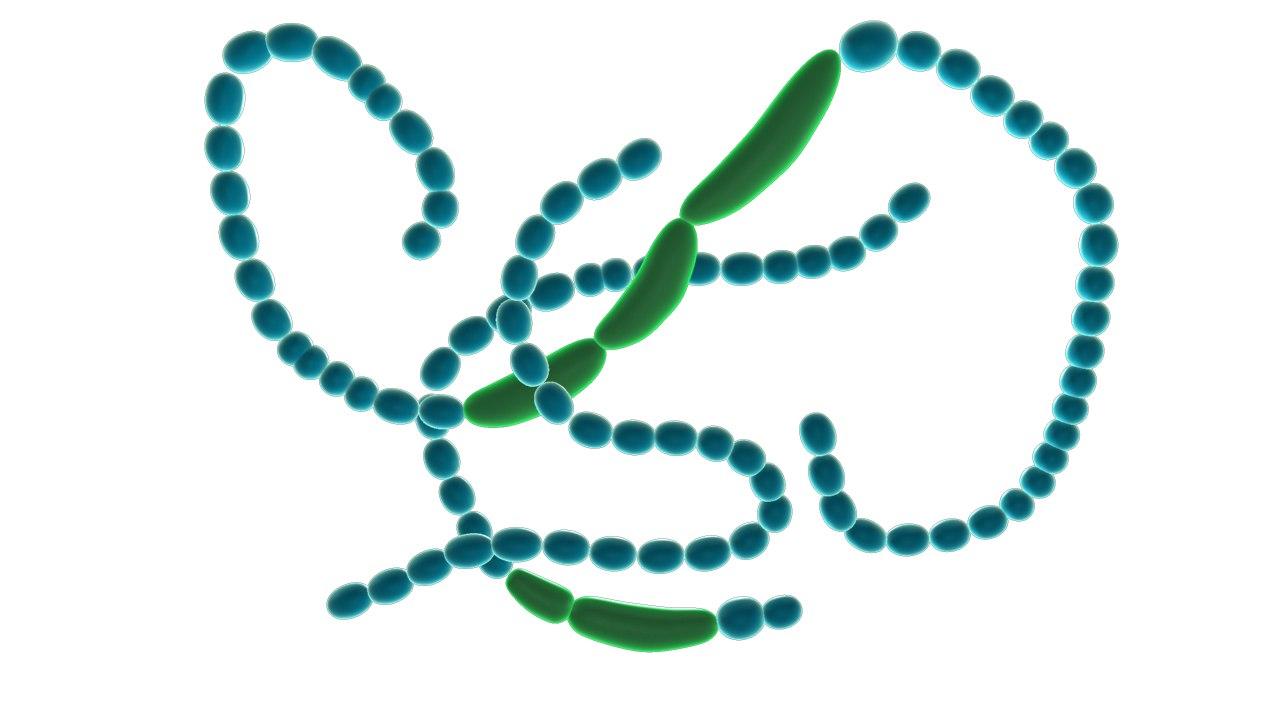3d anabaena cyanobacteria model