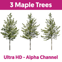 3 Maple Trees HD