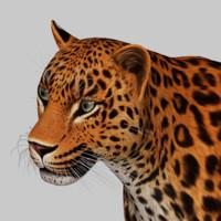 3d model of leopard