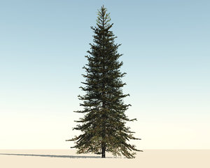 fir tree 3d c4d