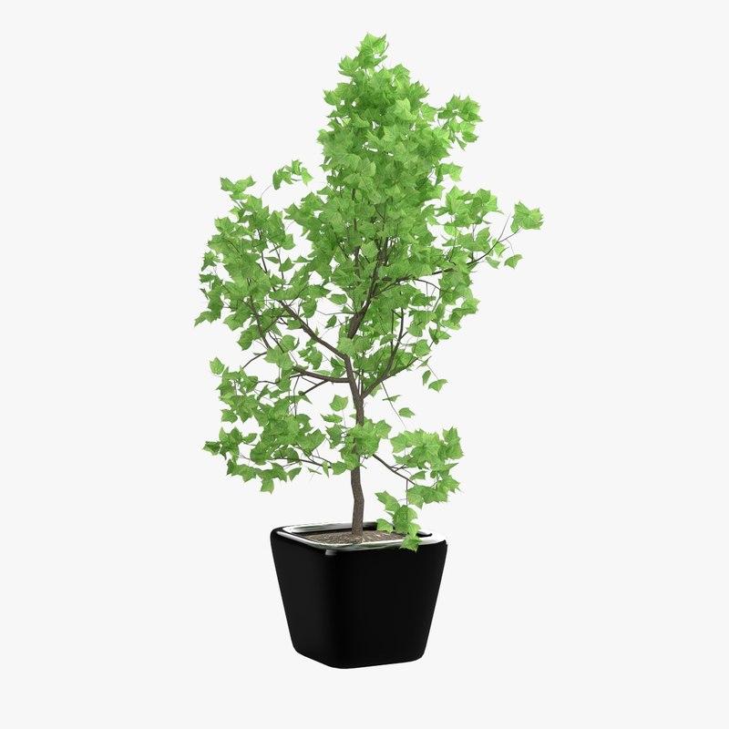 plant pot 3d obj