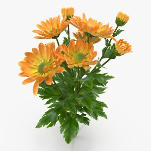 3d model orange chrysanthemum