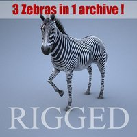 Zebra RIGGED