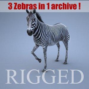 max zebra rig