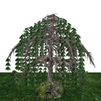 3d model black willow tree