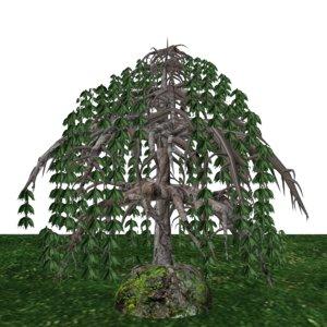 3d model black willow tree