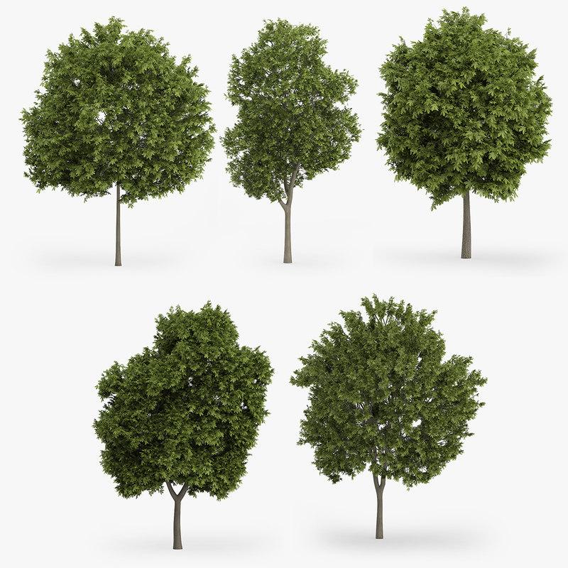 greek maple trees 3d max