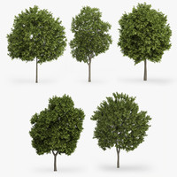 greek maple trees 3d max