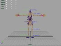 Animation Rig