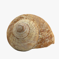 realistic snail shell 3d model