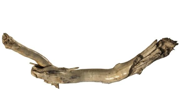 maya branch rotten wood