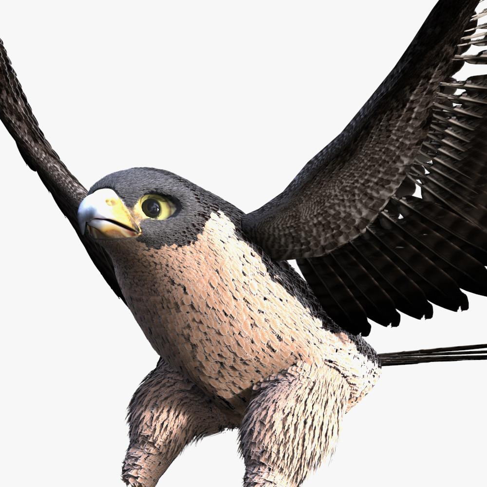 3d rigged falcon