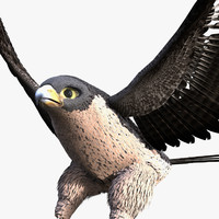3d rigged falcon