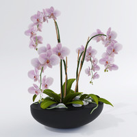 realistic orchids 3ds