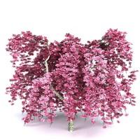 Cherry Tree v1