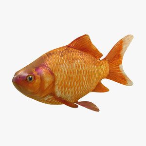 3d goldfish fish common model